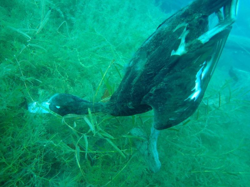 水中で糸が絡まって死んだ鳥